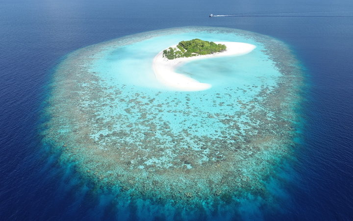 Coral islands may escape 'drowning' as seas rise